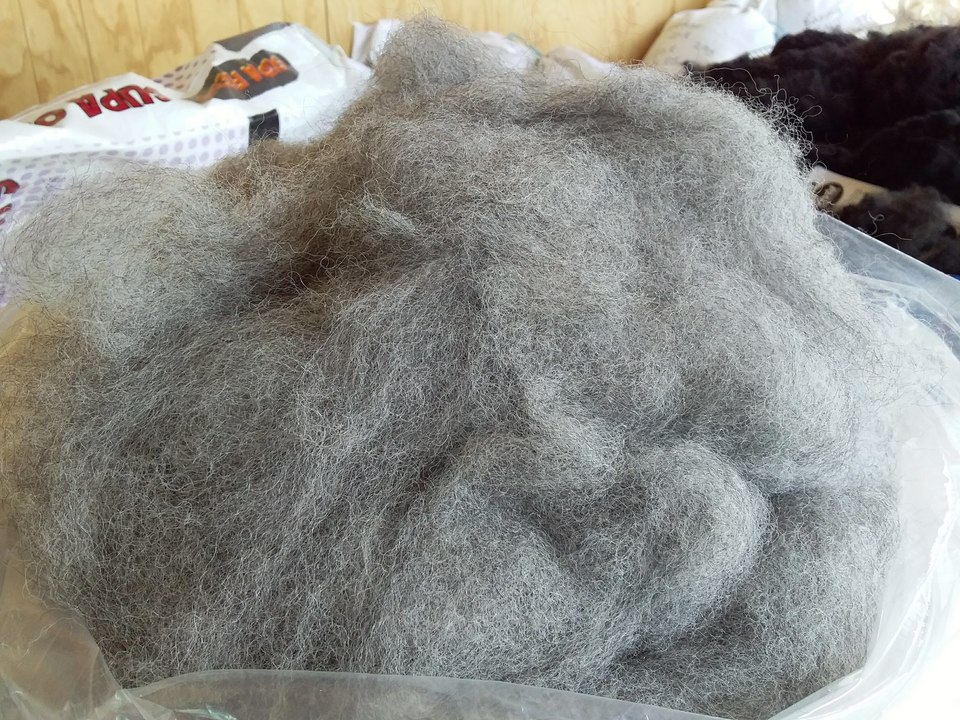 Medium Grey Carded Alpaca